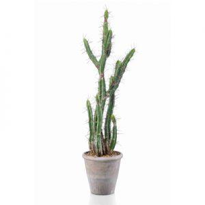 Vetplant Cactus Stetsonia 100