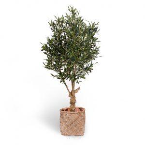 Kunstboom Olijf in Mediterraanse Mand