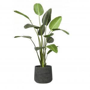 Kunstplant Strelitzia in Rough Patt